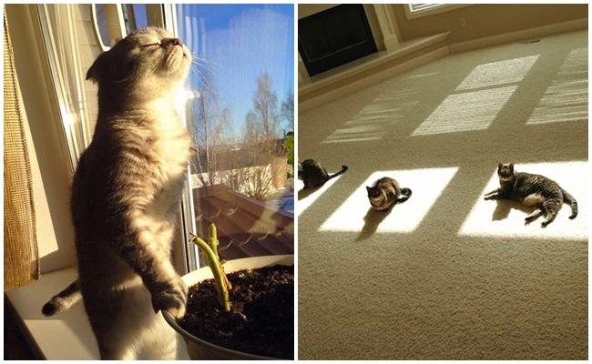 Gün Işığını Yaş Mamadan Bile Daha Çok Seven 18 Sımsıcak Kedi
