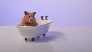 hamster-temizlik-banyo-bilginticom