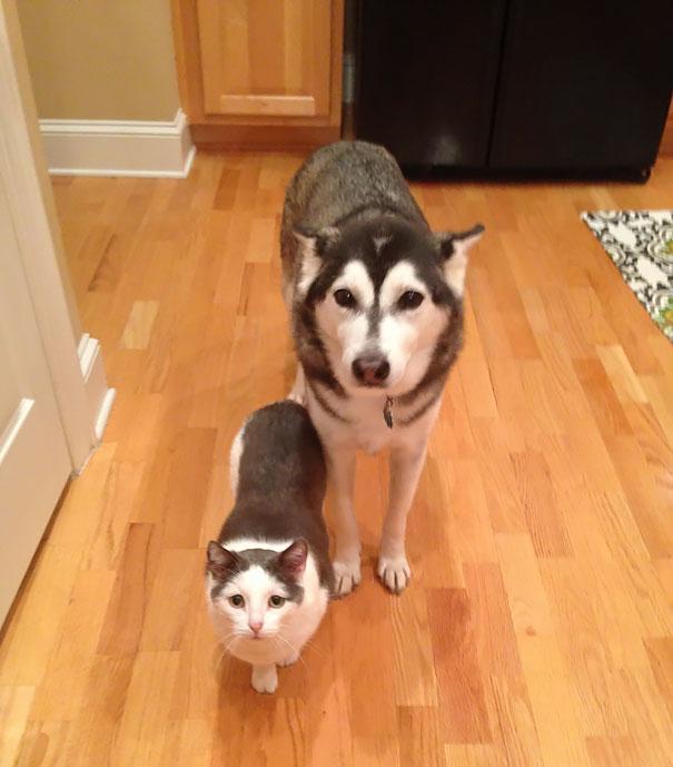 ikiz hayvanlar
