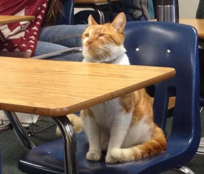 iyi-kediler-patiliyo-1