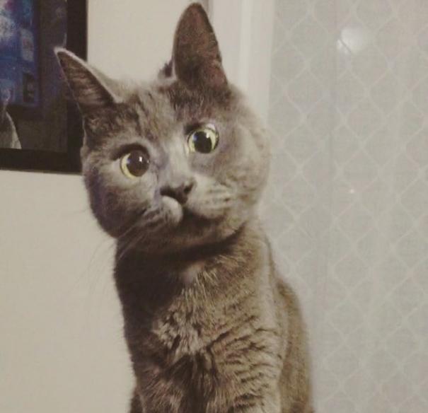 iyi-kediler-patiliyo-8