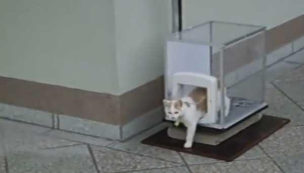 kedi-asansoru-patiliyo-3