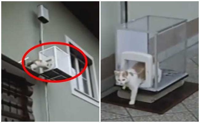 Kedisinin Rahatı İçin Ona Özel Asansör Yapan Çılgın Kedisever