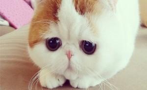 kedi-burnu