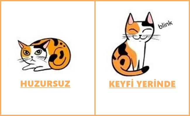 """Kedi Dilinin """"Miyavdan"""" Çok Daha Öte Olduğunu Gösteren 19 Bilgilendirici Çizim"""