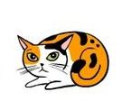 kedi-hareketleri-anlamlari-patiliyo-14