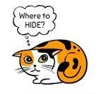 kedi-hareketleri-anlamlari-patiliyo-15