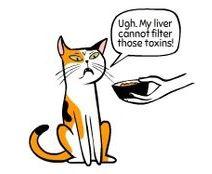 kedi hareketleri anlamlari