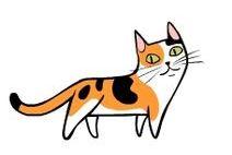 kedi hareketleri