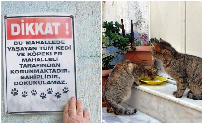 Keşke Her Yer Böyle Olsa Dediğimiz, Tüm Türkiye'ye Örnek Olması Gereken Hayvansever Mahalle