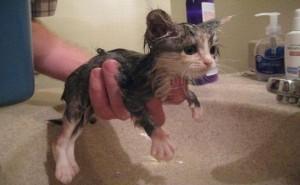 kedi-yikama