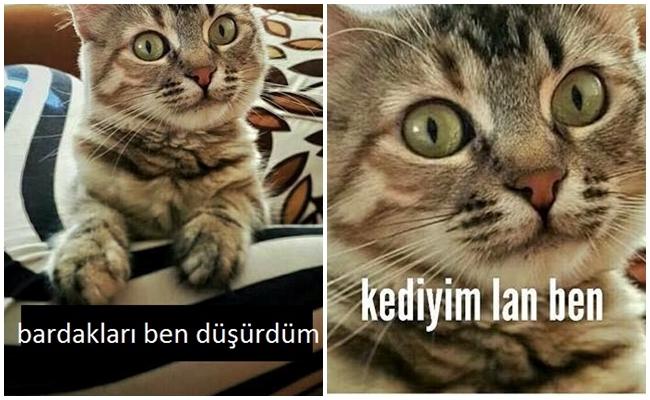 """""""Kediyim Lan Ben"""" Deyip Kedilerin Dile Geldiği 7 İtiraf Dolu Fotoğraf"""
