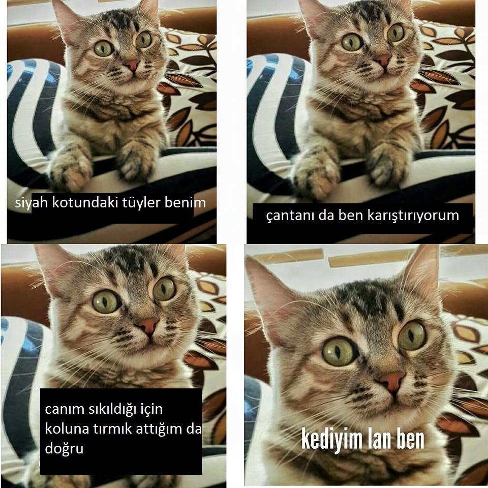 kediyim-lan-ben-patiliyo-2