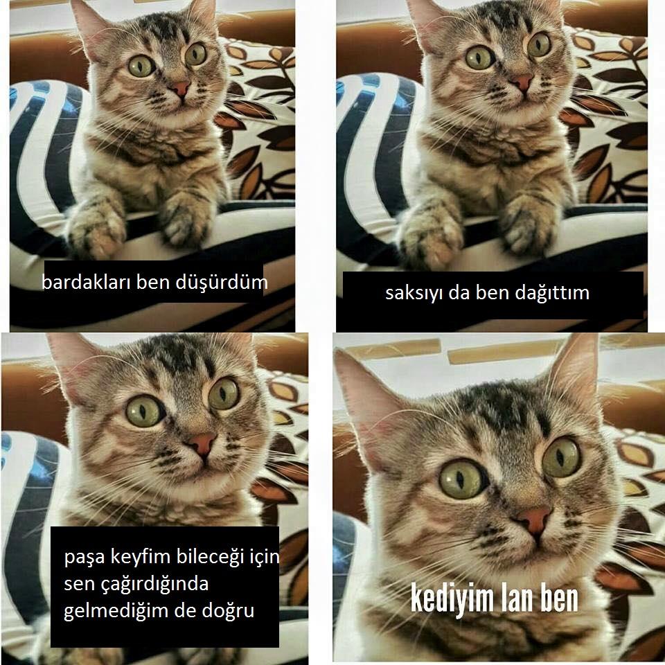 kediyim-lan-ben-patiliyo-3