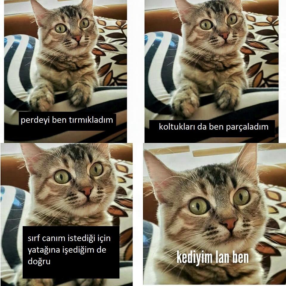 kediyim-lan-ben-patiliyo-4