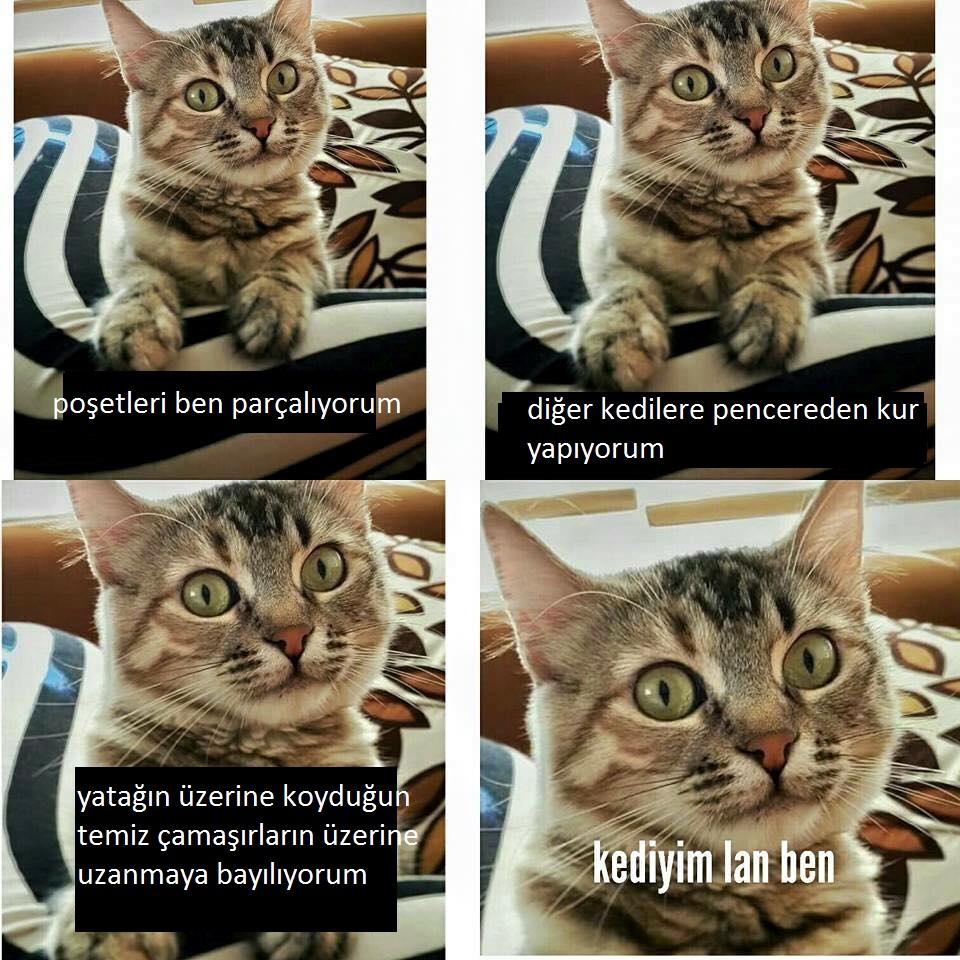 kediyim-lan-ben-patiliyo-5