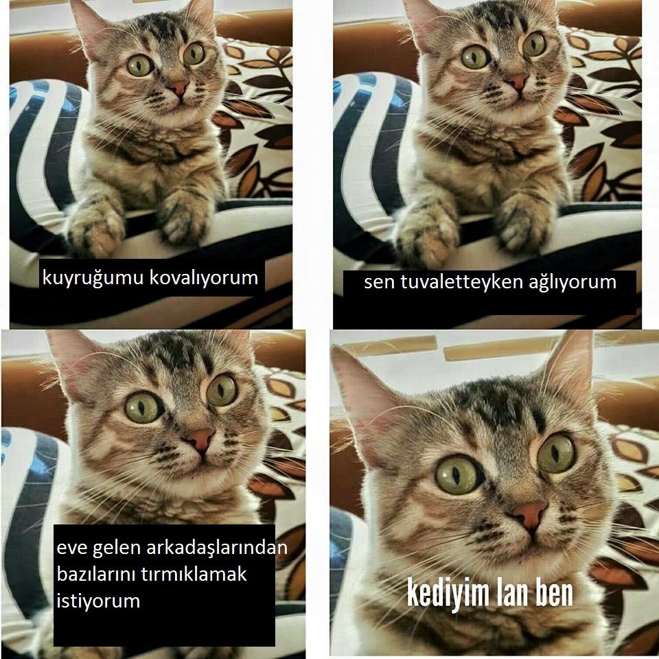 kediyim-lan-ben-patiliyo-6