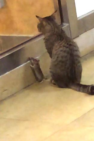 kediyle fare