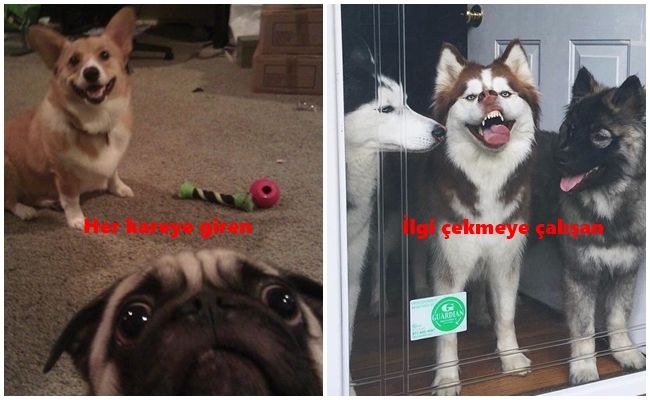 Arkadaşlarımızla Yaşadıklarımızı Köpeklerle Göstermenin 15 Yolu