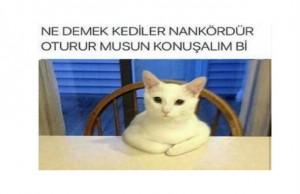 nankor-kedi