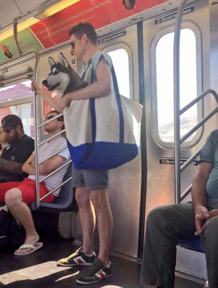 new york metrosu kopekler