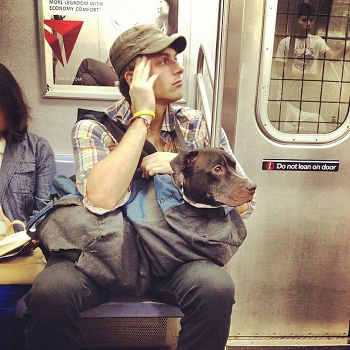 new-york-metrosu-kopekler-patiliyo-3
