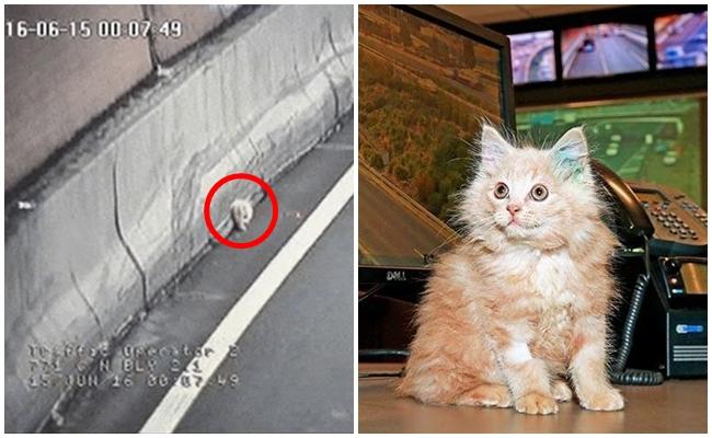 Otoyol Tüneline Girdi, Kameralara Yakalandı, Sonrası İse…