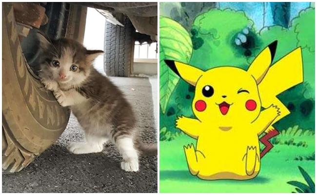 Sokaklardan Pokemon Yerine Toplanıp Sahiplenilmesi Gereken 8 Sevimli Kedi