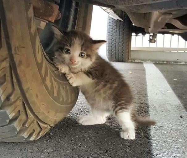 pokemon-kediler-patiliyo-1