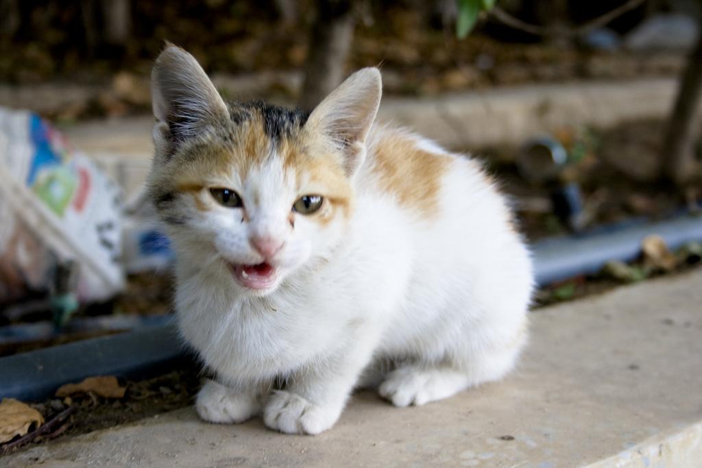 pokemon-kediler-patiliyo-3