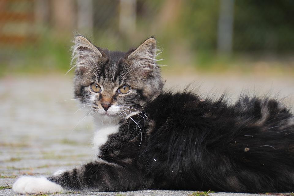 pokemon-kediler-patiliyo-8