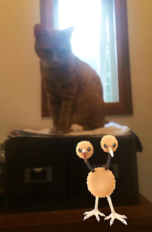 pokemonlari-goren-hayvanlar-patiliyo-13