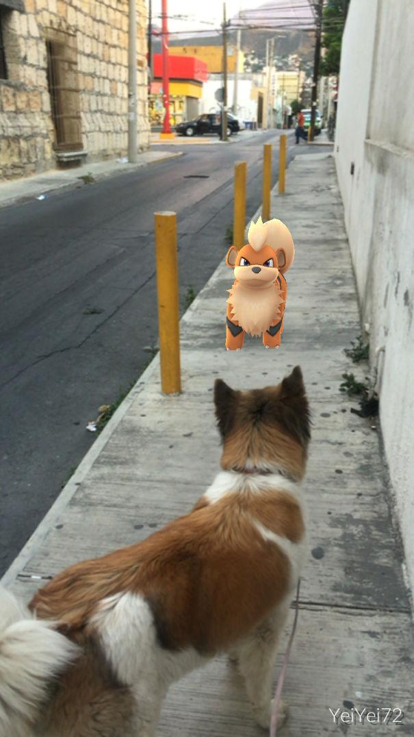 pokemonlari-goren-hayvanlar-patiliyo-15