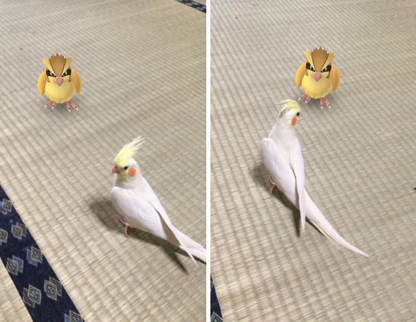 pokemonlari-goren-hayvanlar-patiliyo-2