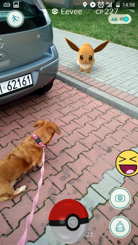 pokemonlari-goren-hayvanlar-patiliyo-21
