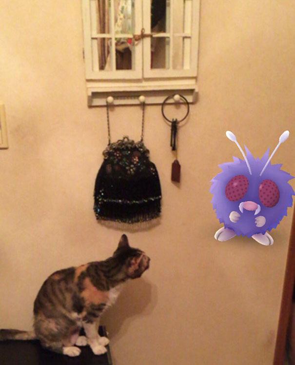 pokemonlari-goren-hayvanlar-patiliyo-9