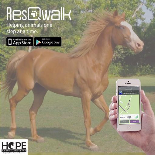 resqwalk-patiliyo-7