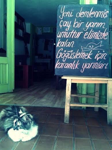 tiryaki kedi