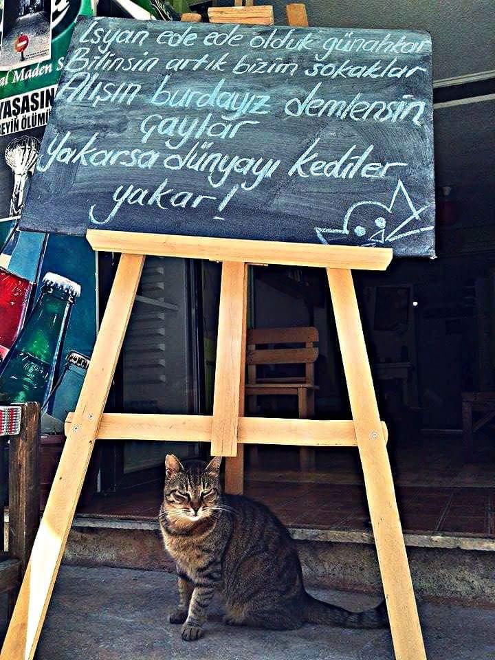 tiryaki-kedi-kafe-patiliyo-5