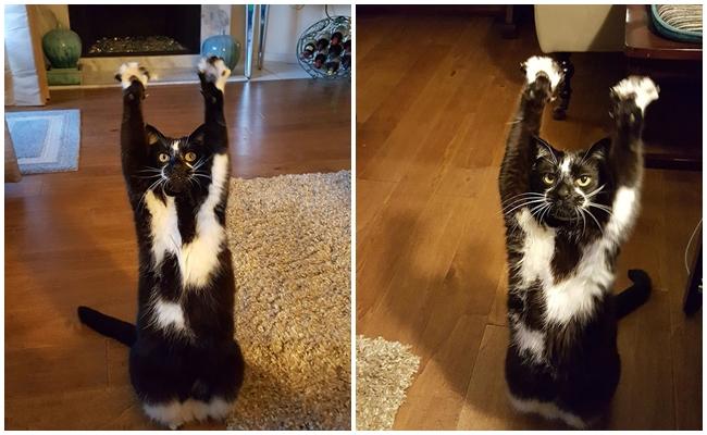 Patilerini Neden Havaya Kaldırdığını Kimselerin Çözemediği Kedinin Hayli Tuhaf Hayatı