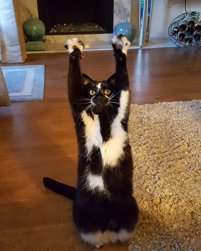 tuhaf kedi