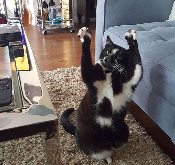 tuhaf-kedi-patiliyo-11