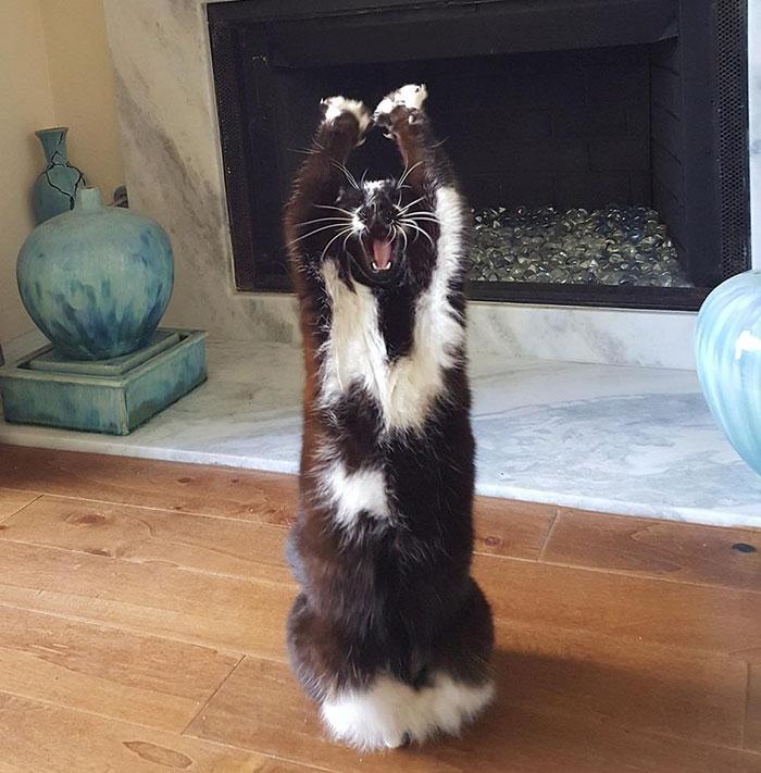 tuhaf-kedi-patiliyo-3