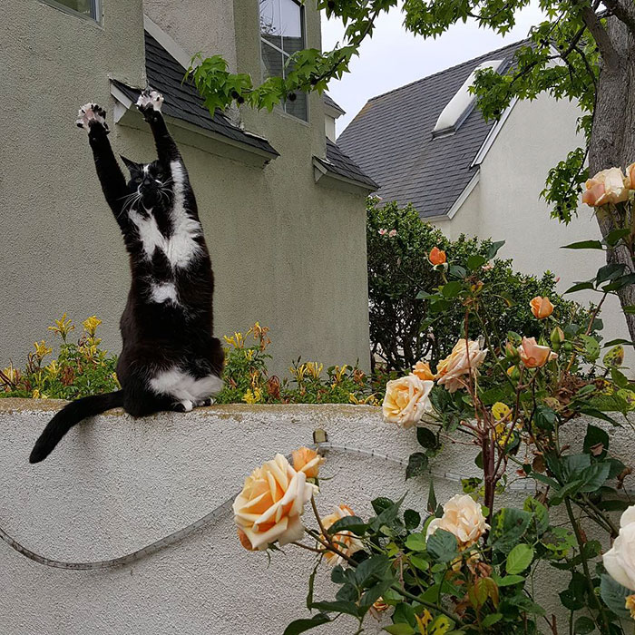 tuhaf-kedi-patiliyo-4
