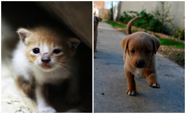 Yürüyerek Hayvanlara Yardım Etmenizi Sağlayan Harika Uygulama: ResQwalk