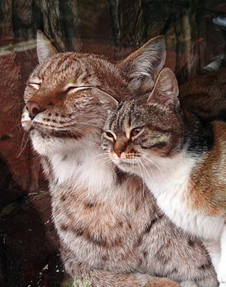 vasak-kedi-dostlugu-patiliyo-1