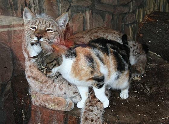 vasak-kedi-dostlugu-patiliyo-2