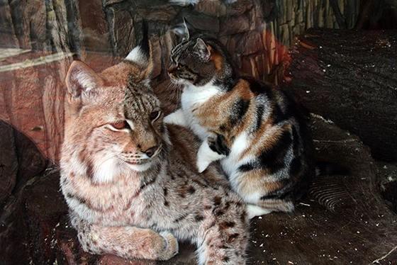 vasak-kedi-dostlugu-patiliyo-3