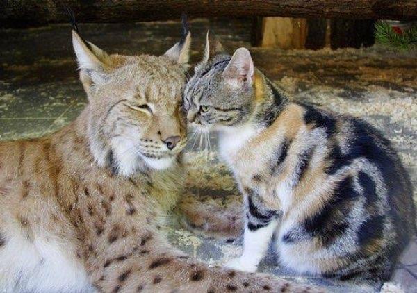 vasak-kedi-dostlugu-patiliyo-5