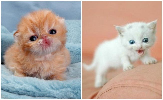 Öksüz Yavru Kedi Sahiplenenlerin Pür Dikkat Okuması Gereken 6 Öneri